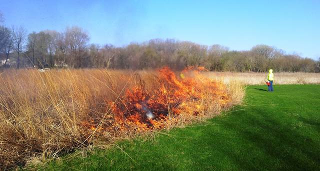 Davenport controlled burn